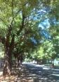 shady trees