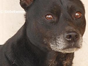 black dog small 2012