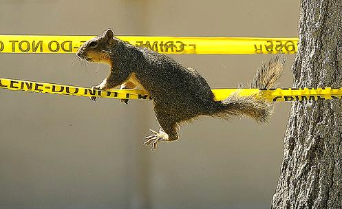 denverpost squirrel