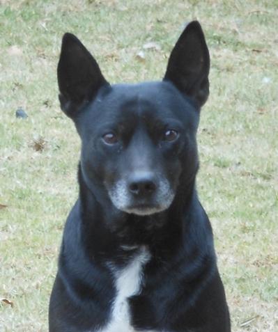 black dog happiness 2