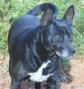 blk doggie2