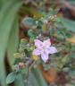 pink flower tiny
