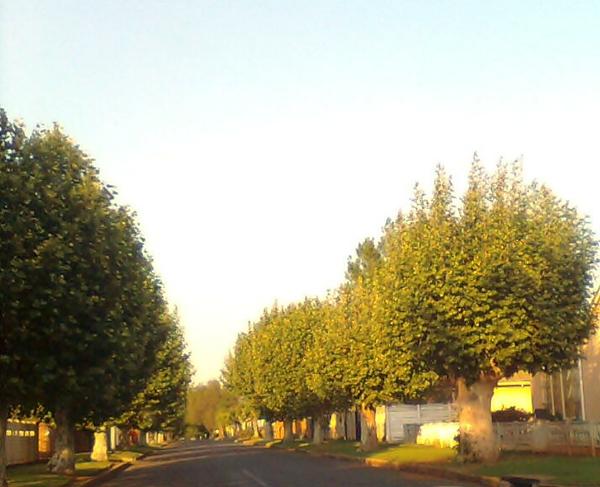 oaktree lane 3