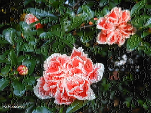 flw pomergranate (4) puzzle