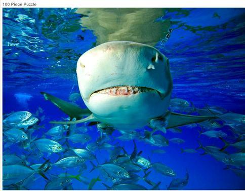 shark jigsaw puzzle