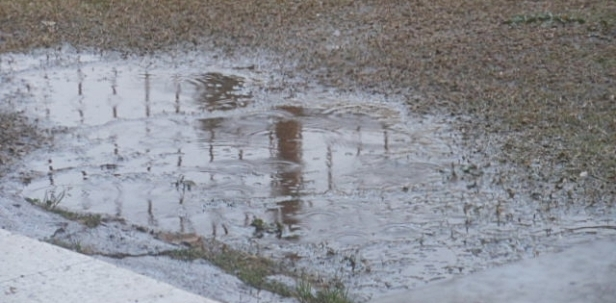 rain soaked lawn