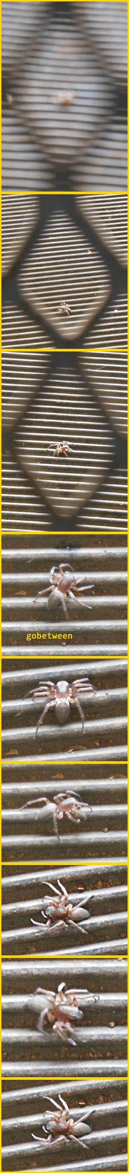 spider walk 1