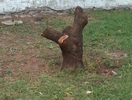 cut trees 2